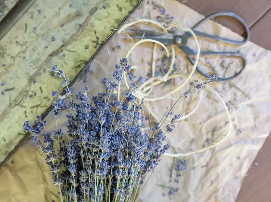 Lavender and Twine by Rebecca Cozart