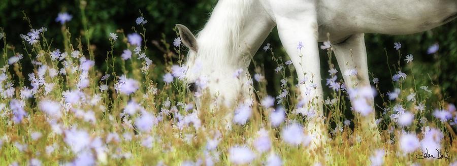 Lavender Dreams by Joan Davis
