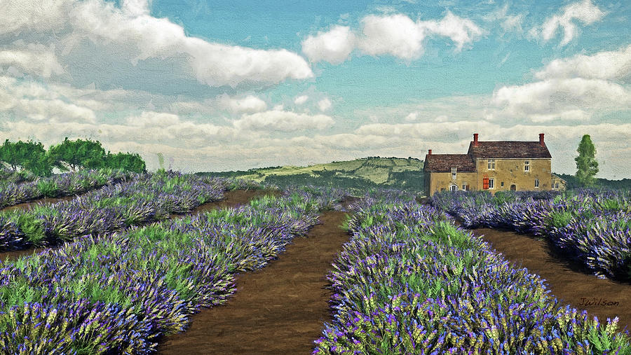 Lavender Fields by Jayne Wilson