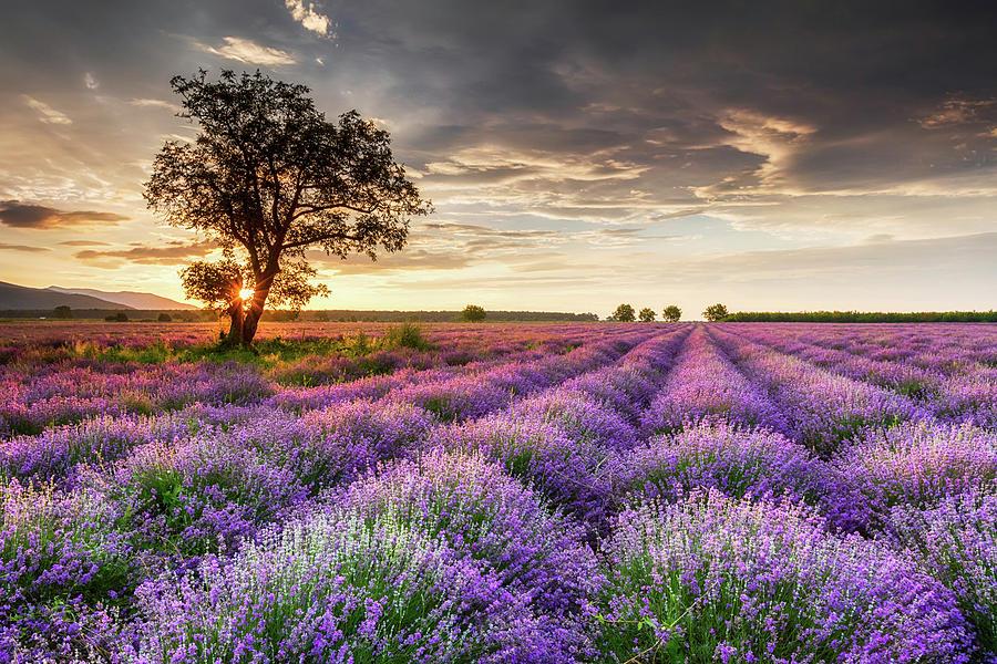 Bulgaria Photograph - Lavender Sunrise by Evgeni Dinev