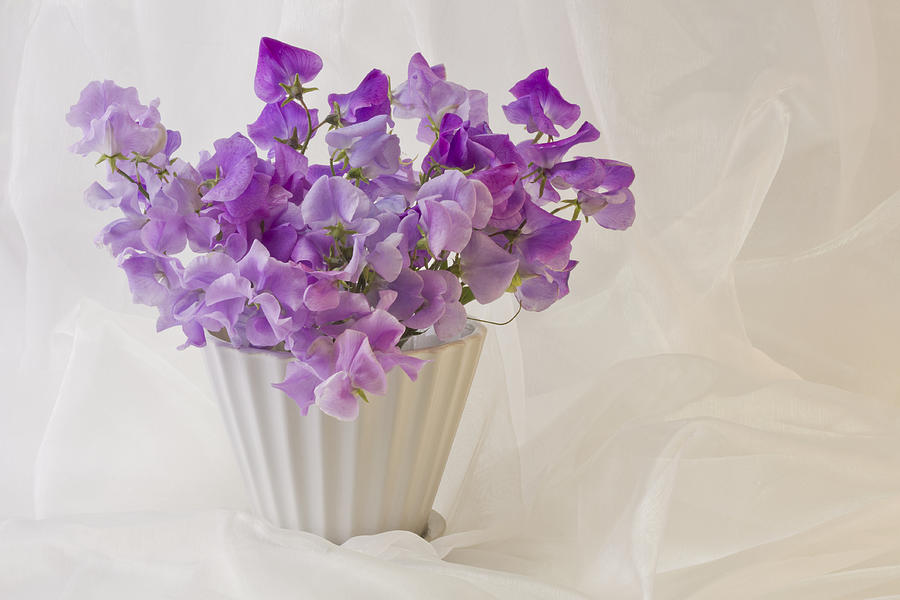 Sweet Peas Photograph - Lavender Sweet Peas And Chiffon by Sandra Foster