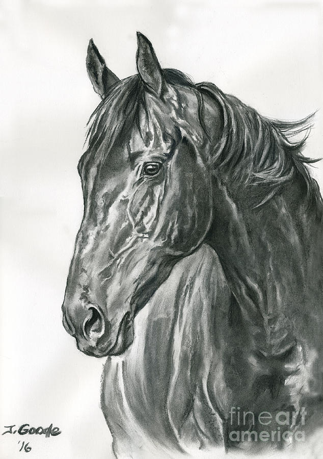 Horse Drawing - Lavinia by Jana Goode