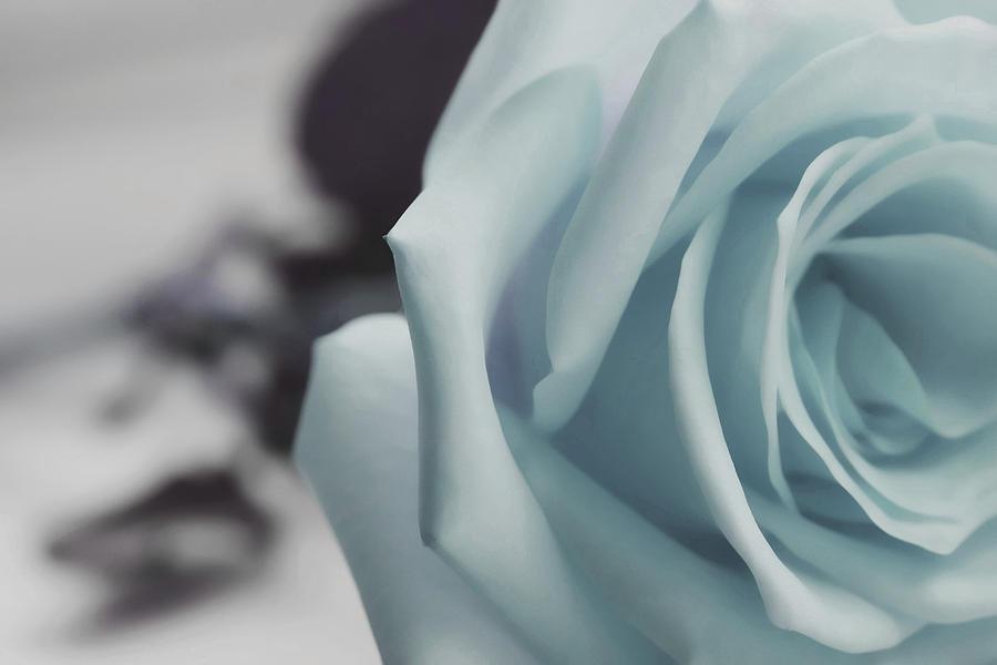 Lavish Rose Photograph