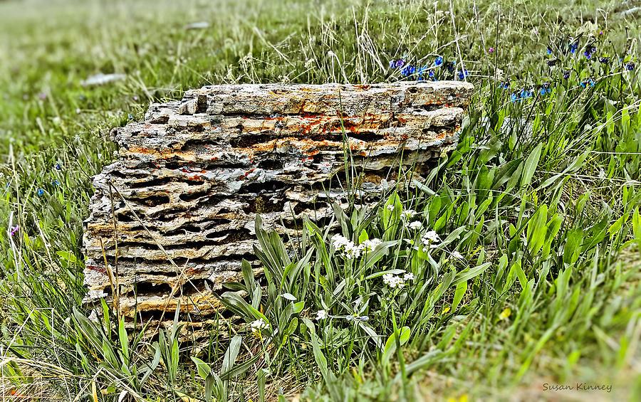 Layered Rock by Susan Kinney