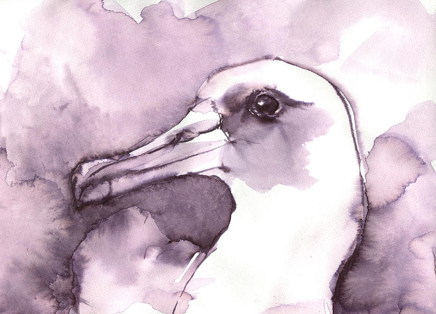 Laysan Albatross by Abby McBride
