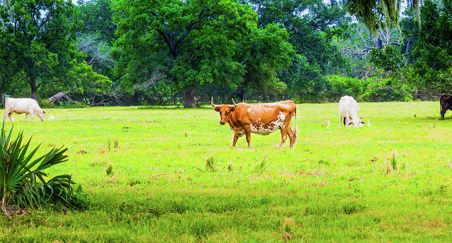 Lazy Afternoon in the Life of a Cow by Judy Wright Lott