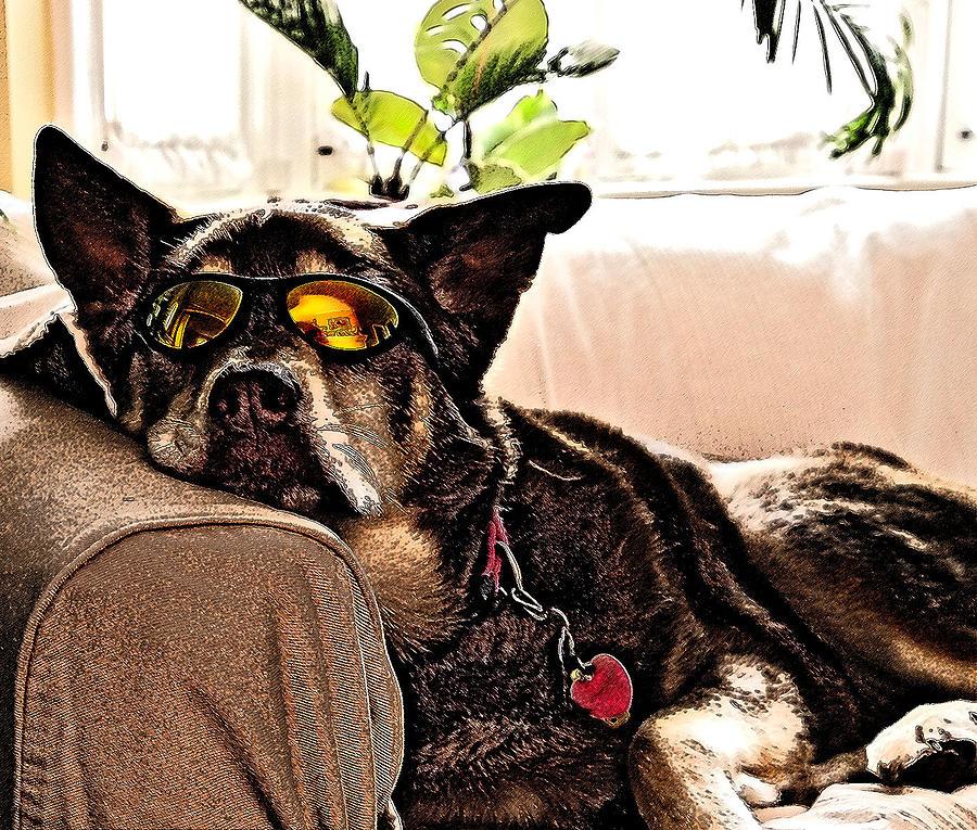 Dog Photograph - Lazy Dog by Jim DeLillo
