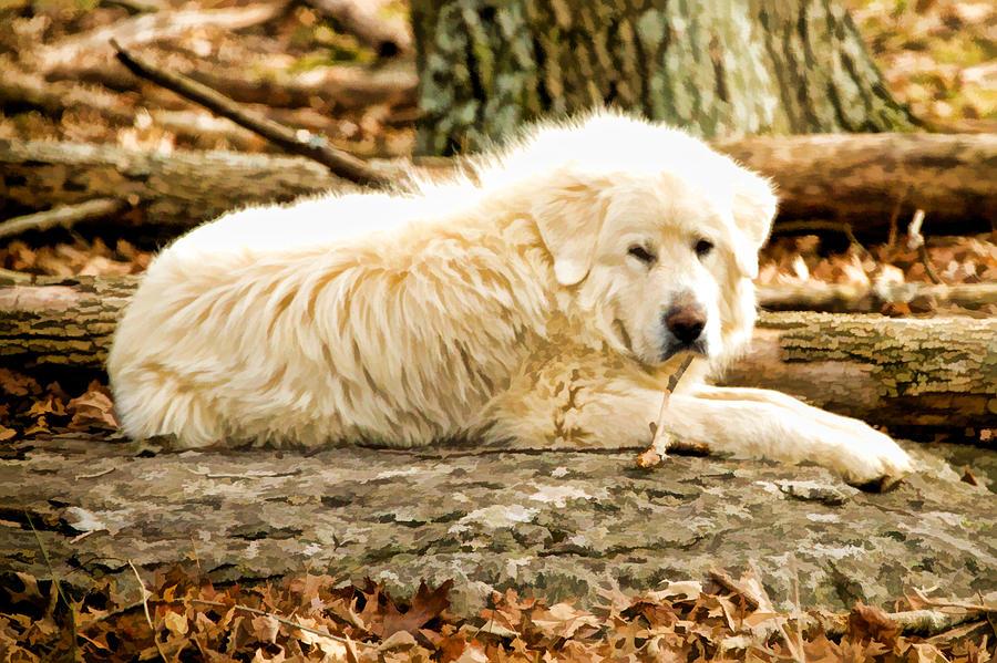 Dog Digital Art - Lazy Dog by Paul Bartoszek