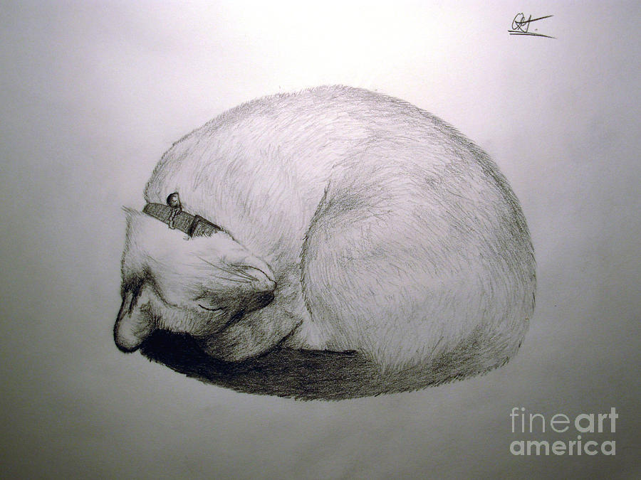 Cat Drawing - Lazy by Oliver Greenbarg