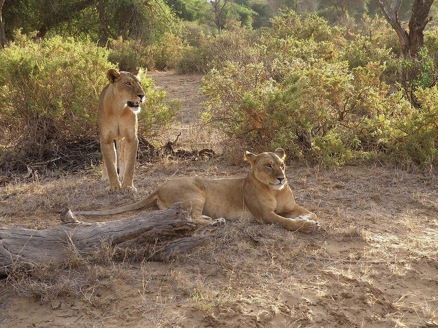 Samburu Photograph - Lazy Samburu Afternoon by Rhoda Gerig