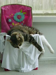 Cat Photograph - Lazypuss by Jodi Bauter