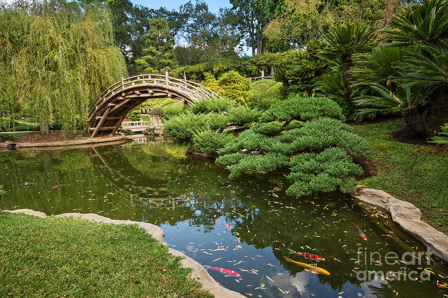 Japanese Garden Photograph - Lead the Way - The beautiful Japanese Gardens at the Huntington Library with Koi swimming. by Jamie Pham