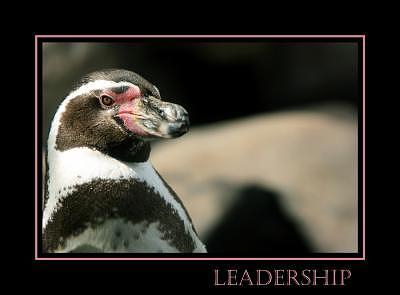 Leadership Photograph - Leadership by Kelly  Kane