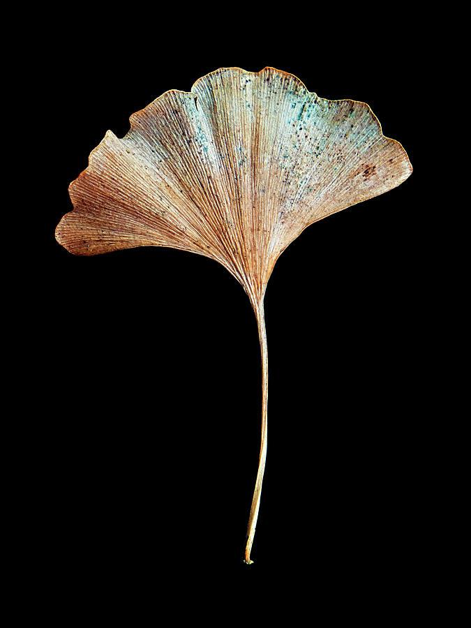 Leaf 17 by David J Bookbinder