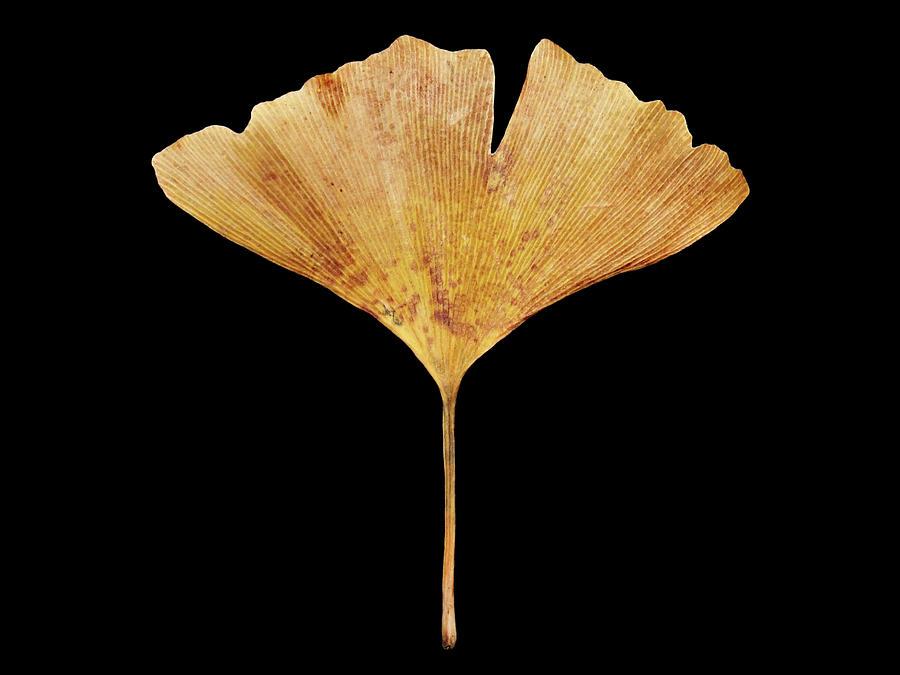 Leaf 18 by David J Bookbinder