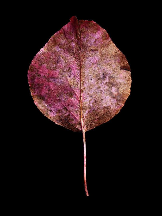 Leaf 20 by David J Bookbinder
