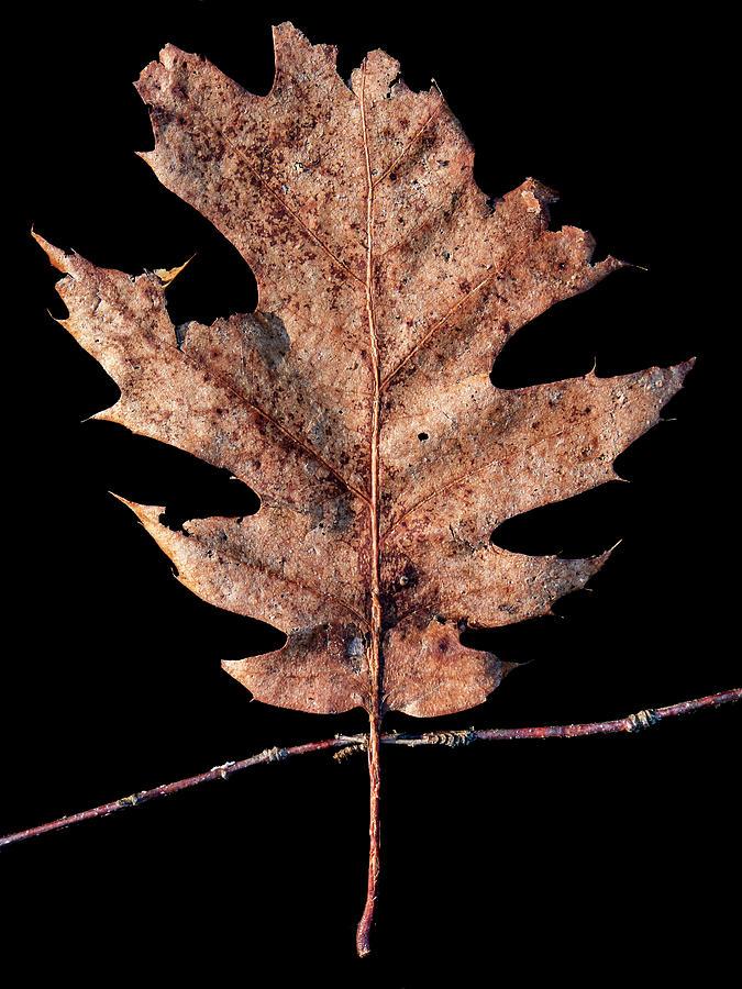 Leaf 22 by David J Bookbinder