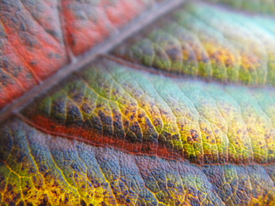 Leaf Photography Photograph - Leaf  by Alyona Firth