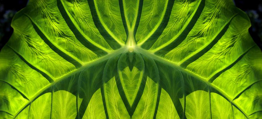 Leaf by Bruce Richardson