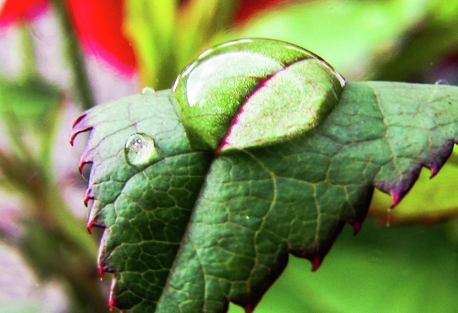 Leaves Photograph - Leaf by Cesar Vieira