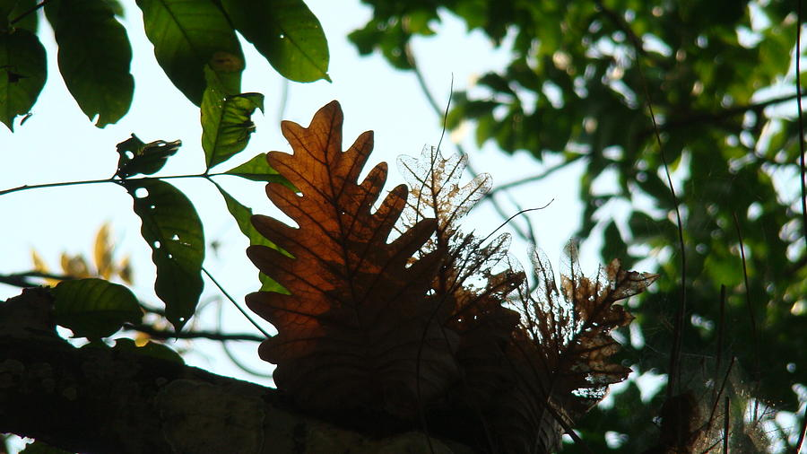 Leaves Photograph - Leaf Chatter by Abir Bordoloi