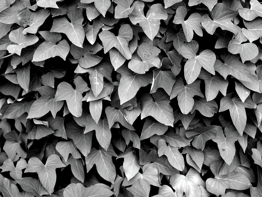 Leaf curtain black and white by james granberry
