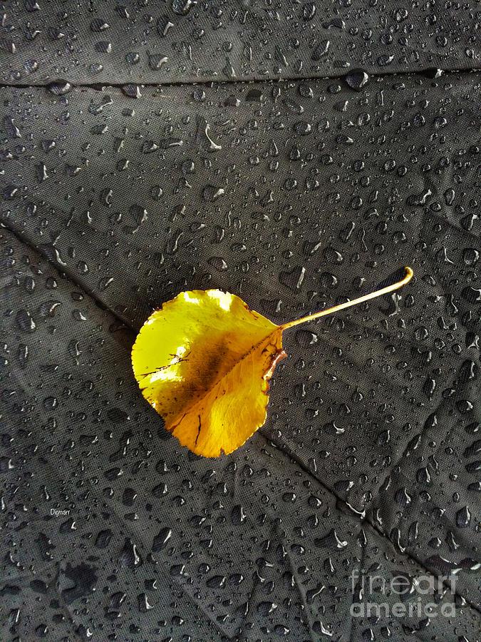 Autumn Photograph - Leaf Drops  by Steven Digman