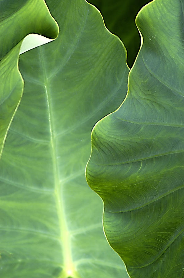 Leaf Photograph - Leaf Edges by Robert Ponzoni