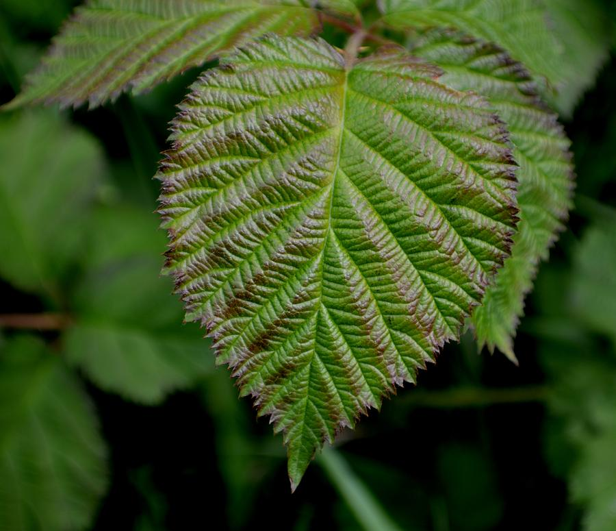 Floral Photograph - Leaf by Ekta Gupta