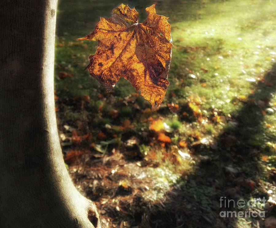 Autumn Photograph - Leaf Fall  by Steven Digman