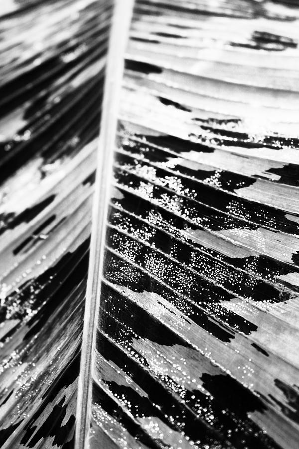 Macro Photograph - Leaf by Fine Arts