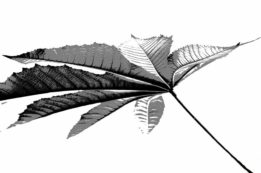 Leaf Photograph - Leaf In Black And White by Elva Robinson