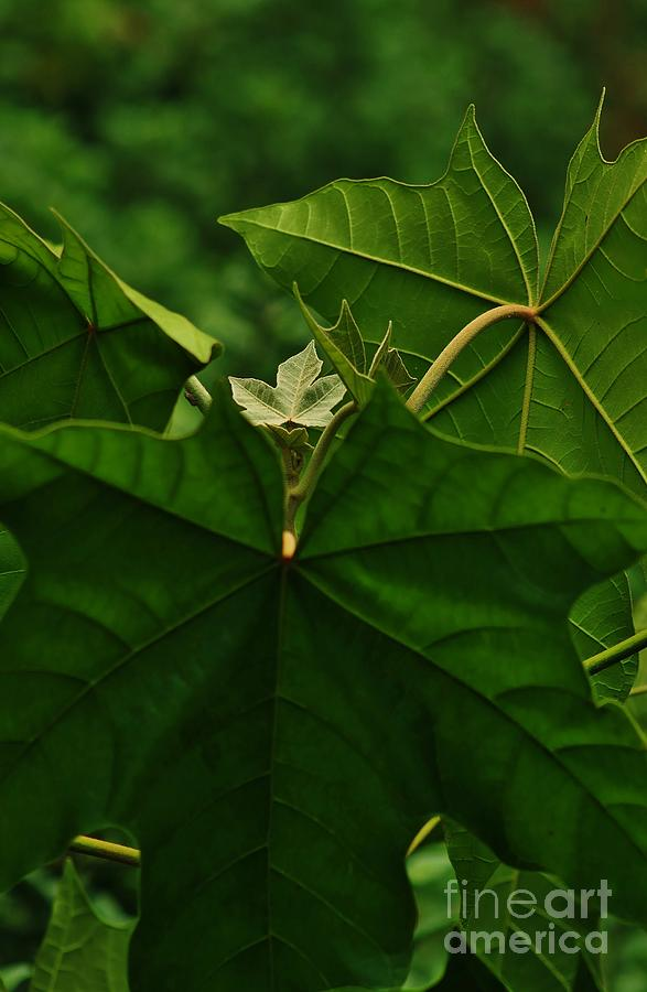 Leaf Photograph - Leaf In The Middle by Craig Wood
