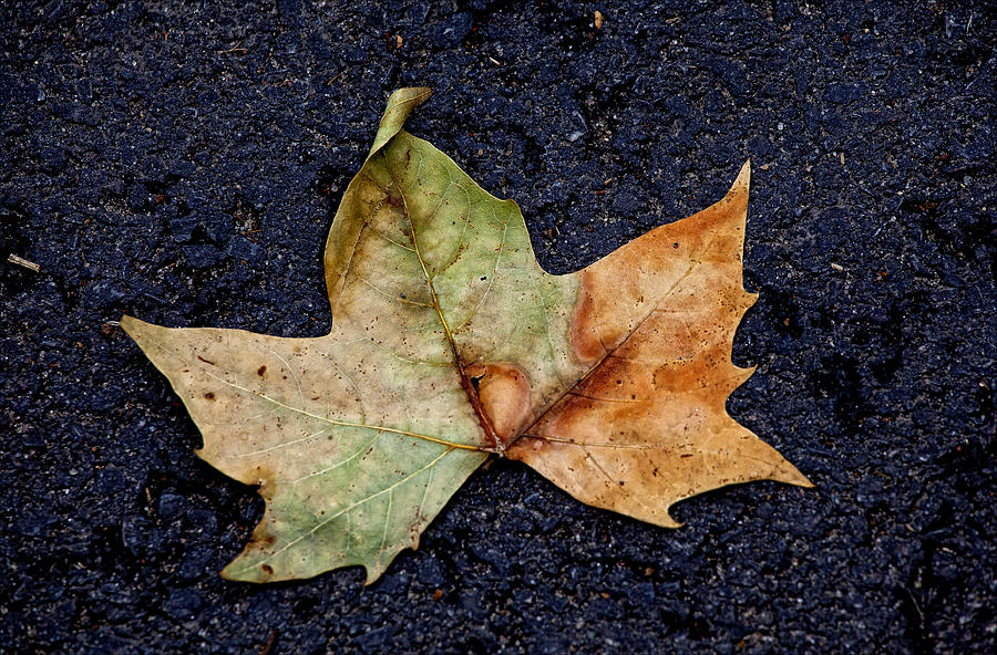 Leaf Photograph - Leaf In The Road by Robert Ullmann