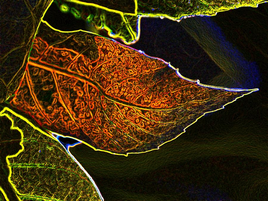 Leaves Photograph - Leaf Interpretation by Norman Andrus