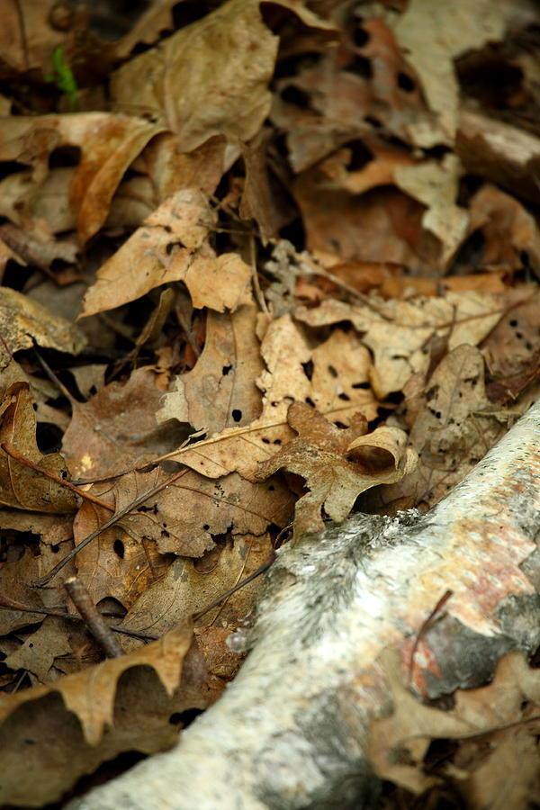 Leaf Photograph - Leaf Litter by Mark Platt