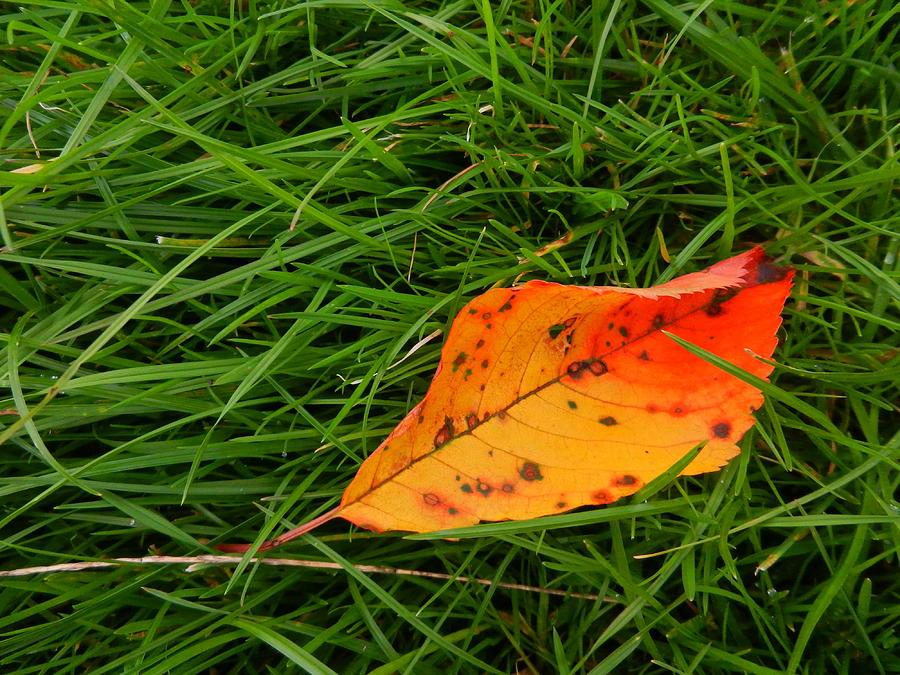 Handheld Photograph - Leaf by Nik Watt