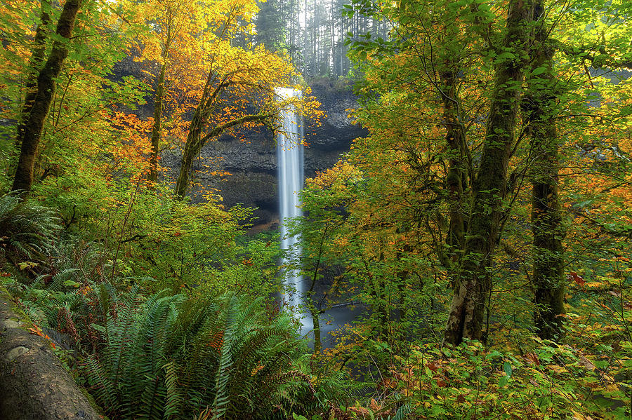 Fall Photograph - Leaf Peeping And Waterfall by David Gn