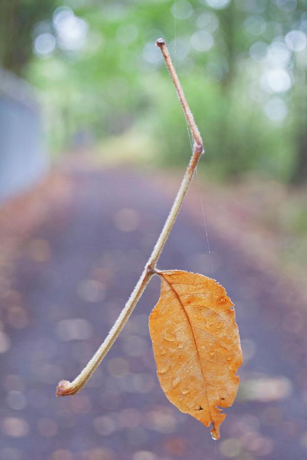 Leaf Photograph - Leaf by Robert Braley