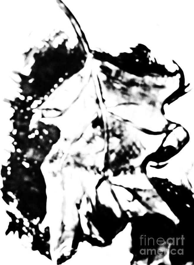Black And White Photograph - Leaf Study Black And White by Jamey Balester