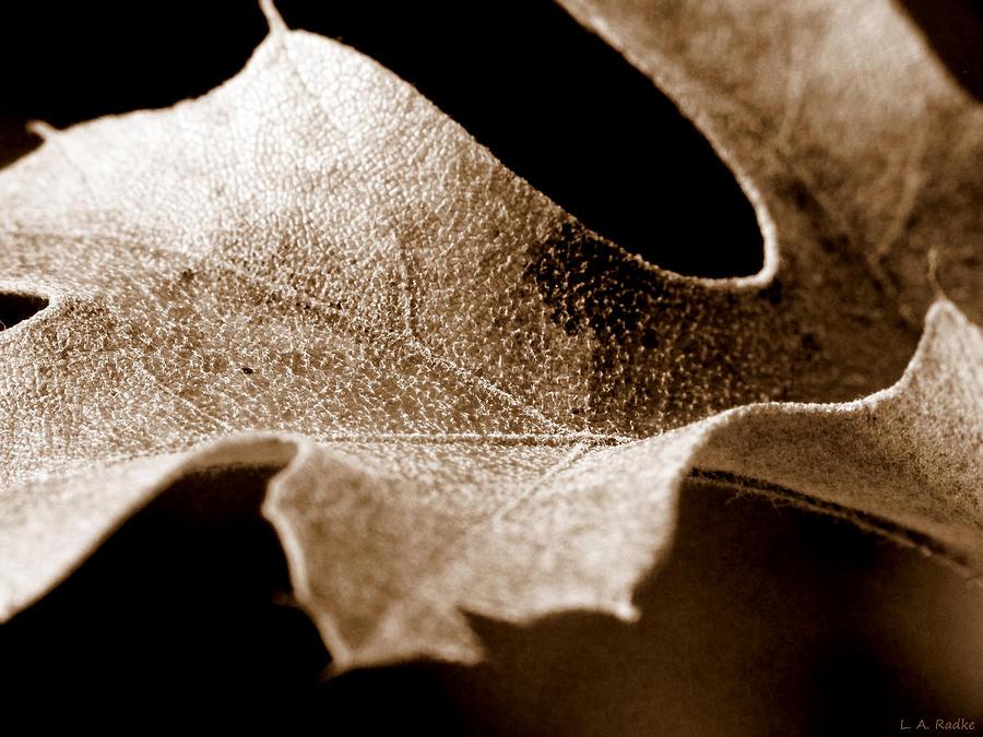 Macro Photograph - Leaf Study In Sepia by Lauren Radke