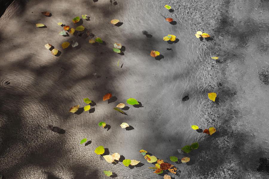 Water Photograph - Leaf Swirl by Carolin Fennern