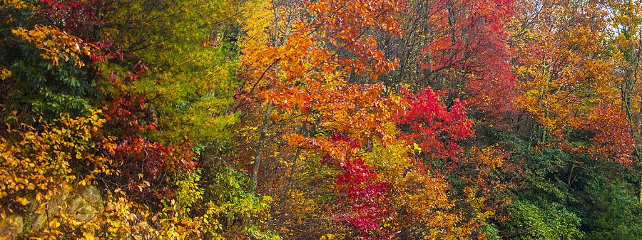 Leaf Tapestry by Rob Hemphill