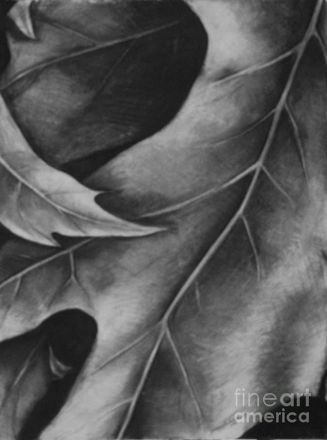 Leaves Drawing - Leaf The Final Stage by Jamey Balester