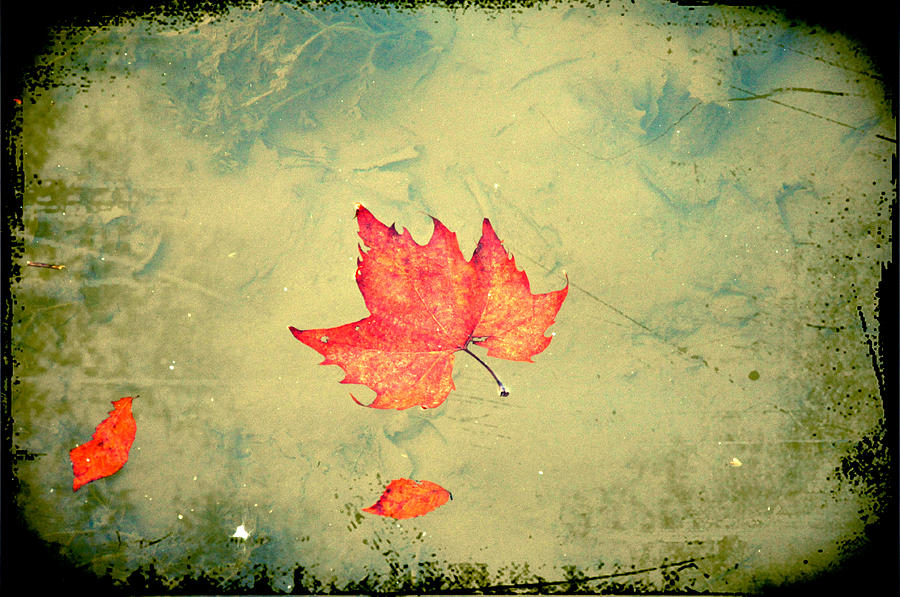 Leaf Photograph - Leaf Upon The Water by Bill Cannon
