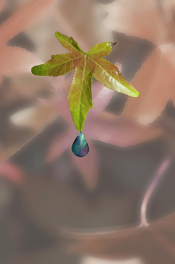 Leaf Photograph - Leaf With Droplet by Peter Hill