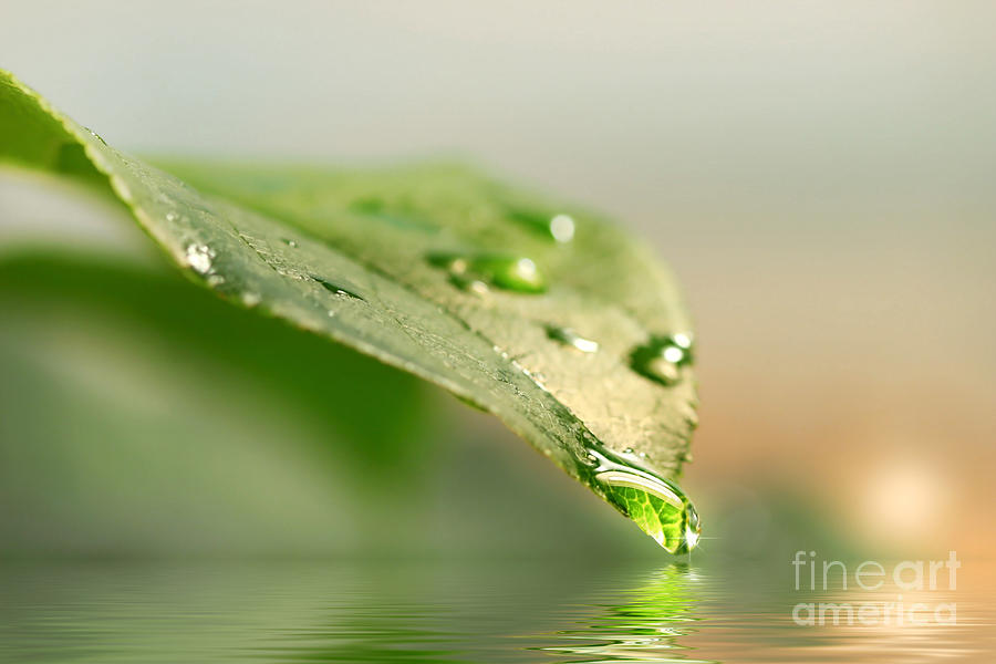 Background Photograph - Leaf With Water Droplets by Sandra Cunningham