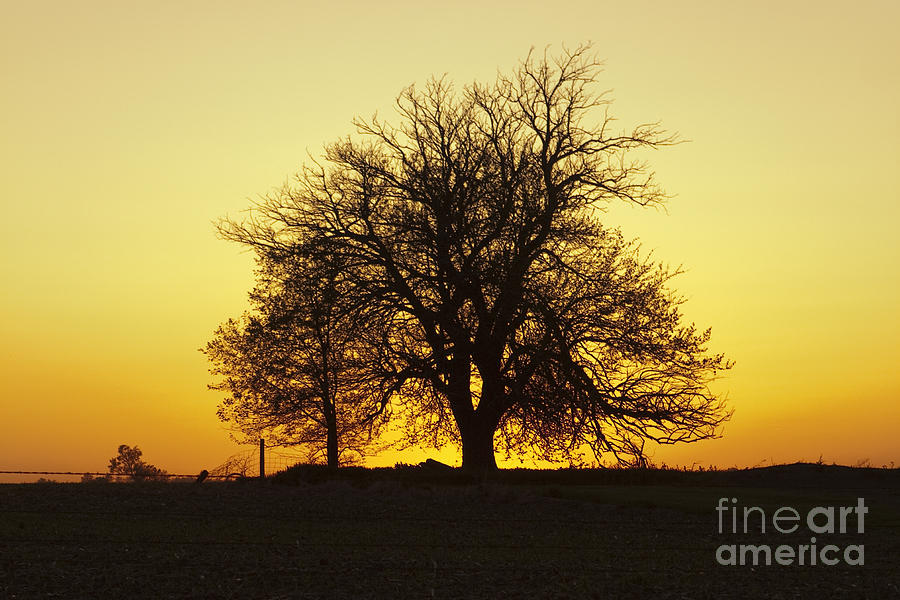 Leafless Photograph - Leafless Tree Against Sunset Sky by Sharon Foelz