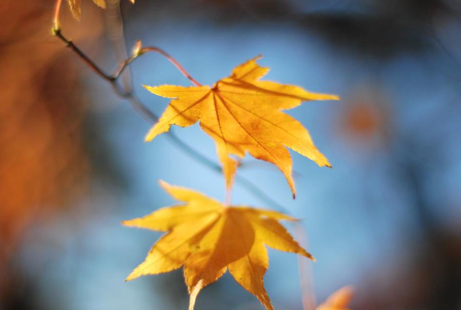 Leaf Photograph - Leafs 1 by Bernadeta Baczynska