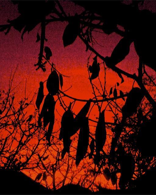 Tree Photograph - Leafs And Tree On Sunset by Igor Tudoran